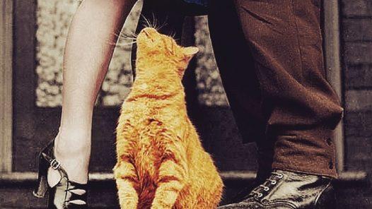 Un matrimonio, un funerale, per non parlar del gatto